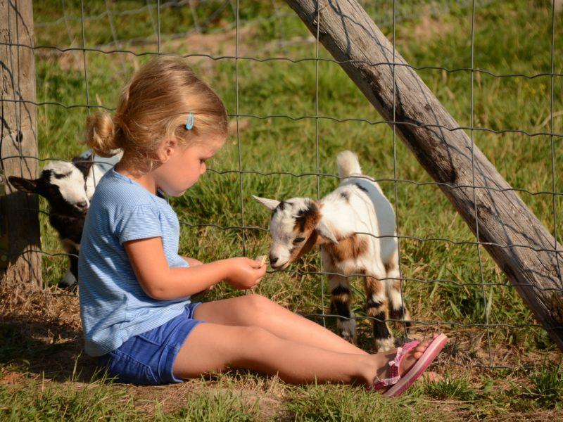 Kindvriendelijk kamperen met kinderen