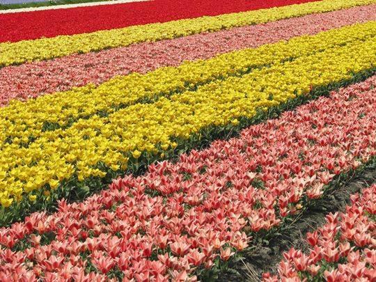 Landal - Dunimar - bloemen