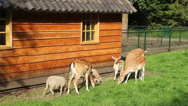 De Leemkule - kids-campings - hertjes in de dierenweide