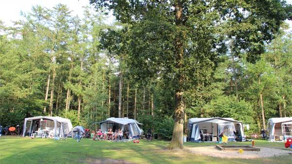 De Leemkule - kids-campings - kamperen tussen de bomen