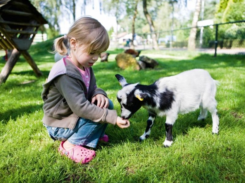 De Veluwse Hoevegaerde Kids-Campings dierenweide