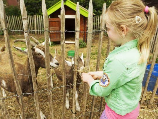 't Loo - kids-campings - geiten op de kinderboerderij