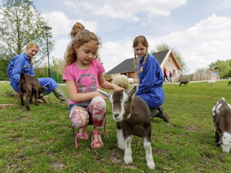 Parc Sandur - kids-campings - kinderboerderij