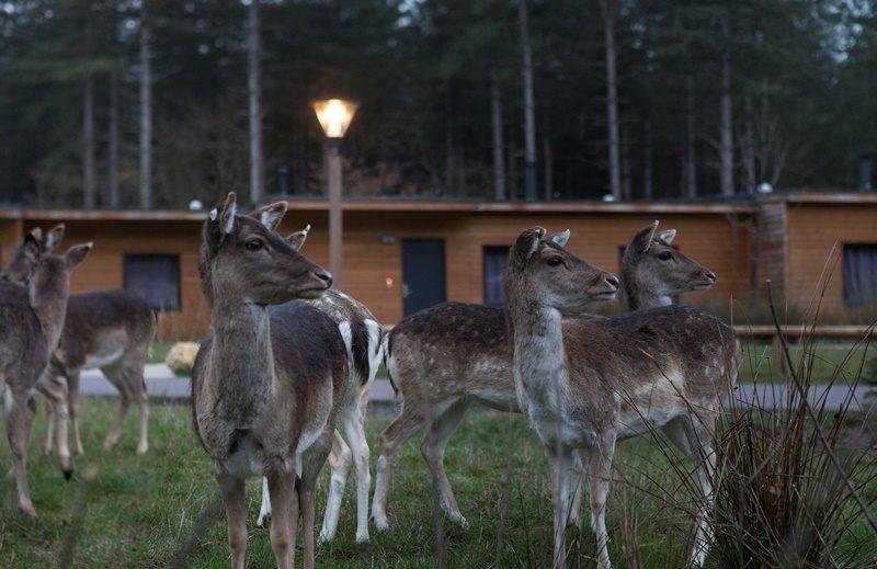 Le Bois Aux Daims - kids-campings - wilde dieren spotten