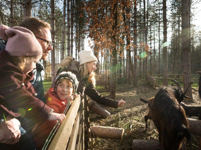 Le Bois Aux Daims - kids-campings - met de dieren
