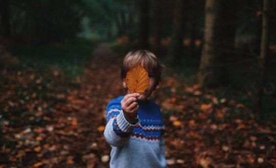 De leukste activiteiten tijdens de herfst