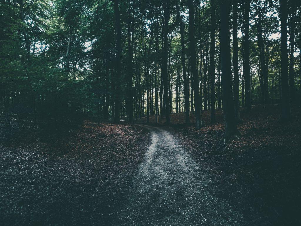 Wandelen met pasen in de mooie natuur, de Veluwe