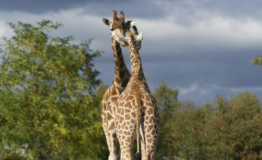 3x de leukste dierenparken bij regen